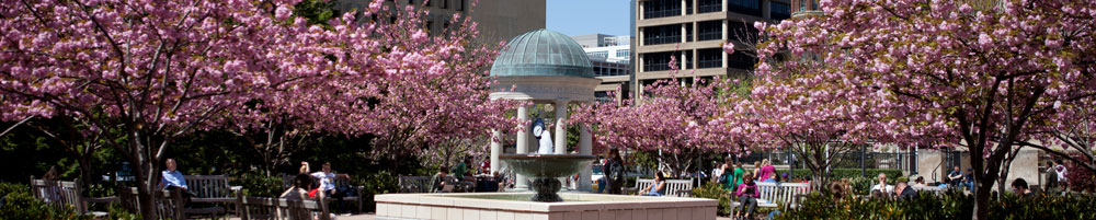 cherry blossoms surrounding a gazebo on the GWU Campus